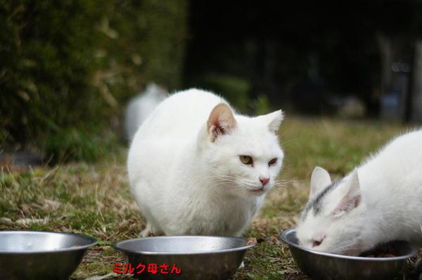 DSC07597 ミルク母さん.jpg