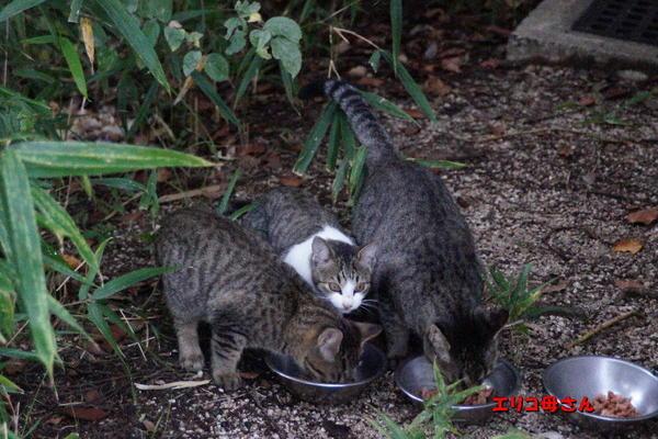 DSC07683 エリコと子猫.jpg