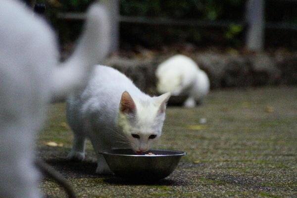 DSC07754 ユミの子猫.jpg