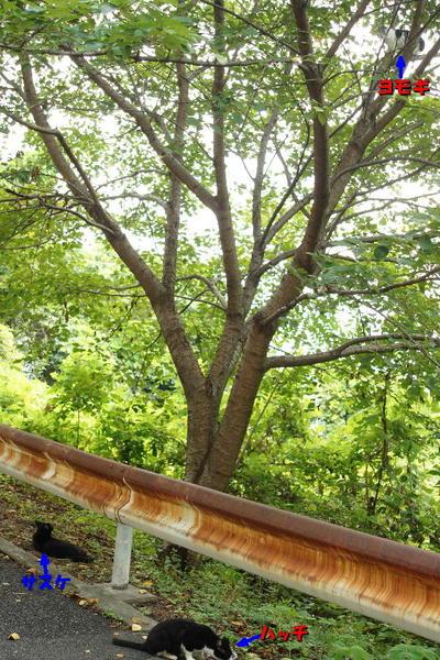 DSC07795 木の上のヨモギ.jpg