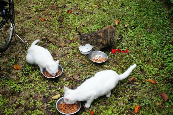 DSC07815 菊とユミの子猫.jpg