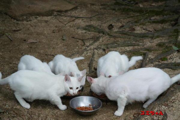 DSC07825 ユミと子猫.jpg