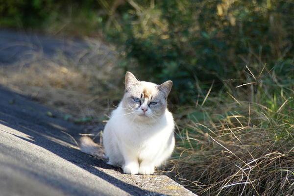 DSC07834 墓地の捨て猫.jpg