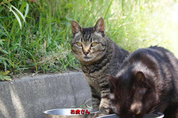 DSC07975 お虎さん.jpg