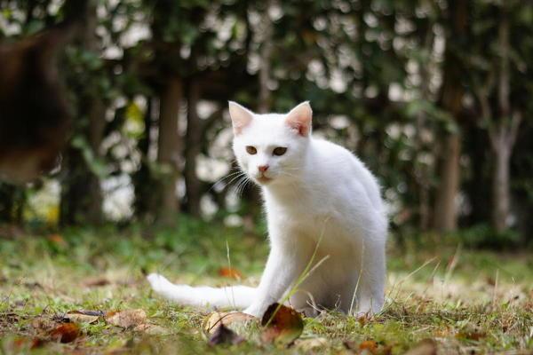 DSC08056 ユミの子猫.jpg