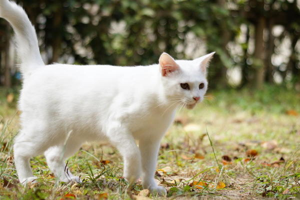 DSC08062 ユミの子猫.jpg