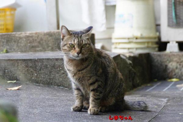 DSC08151 しまちゃん.jpg