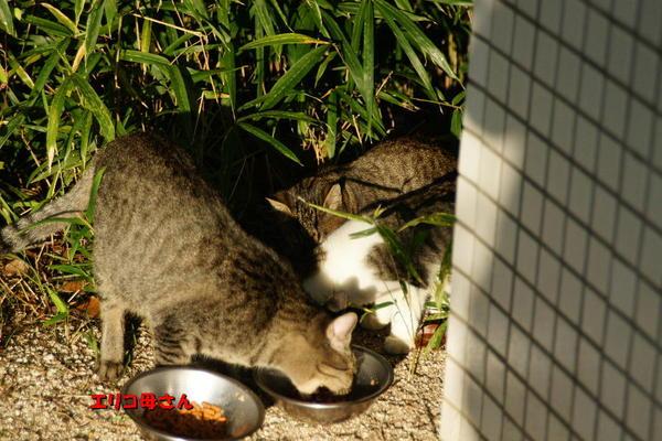 DSC08262 エリコと子猫.jpg
