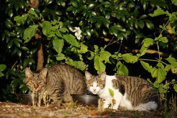 DSC08275 エリコの子猫.jpg