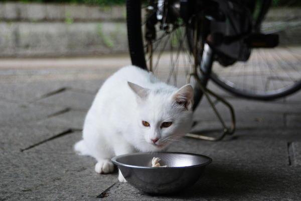 DSC08371 ユミの子猫.jpg