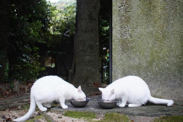 DSC08411 ユミの子猫.jpg