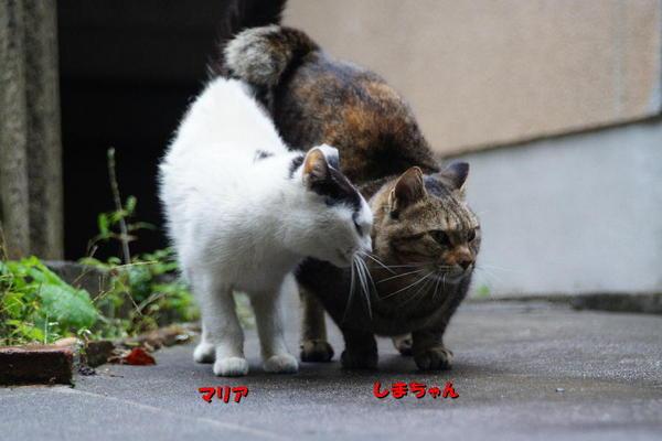 DSC08473 マリアとしまちゃん.jpg