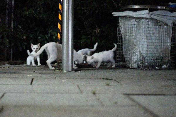 DSC08502 ユミと子猫.jpg