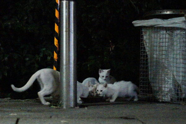 DSC08512 ユミと子猫.jpg
