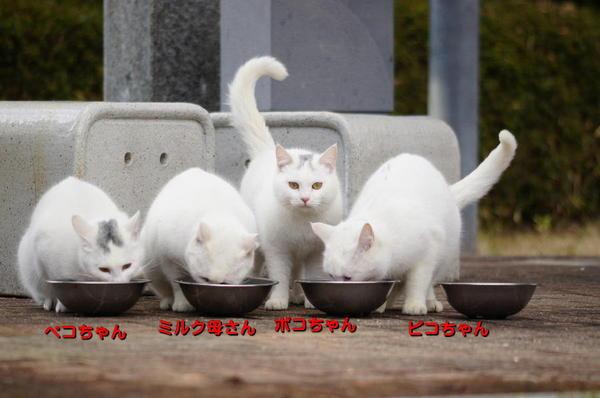 DSC08518 ミルクの家族.jpg