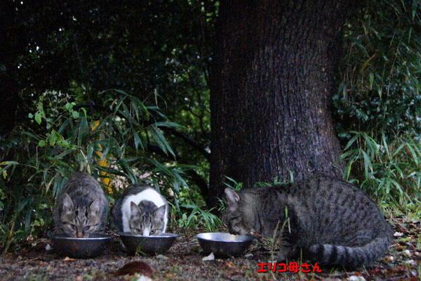 DSC08532 エリコと子猫達.jpg