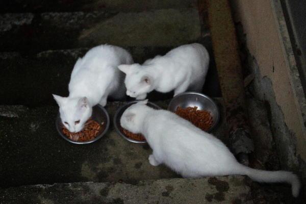 DSC08594 ユミの子猫.jpg