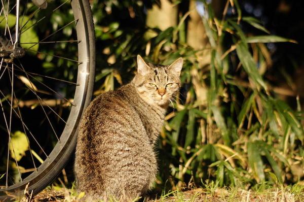 DSC08611 エリコの子猫.jpg