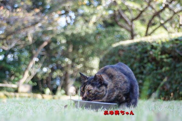 DSC08746 あゆ美.jpg