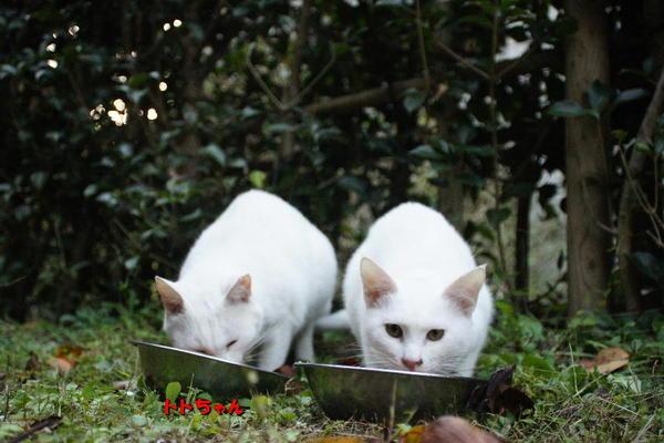 DSC08872 ユミの子猫.jpg