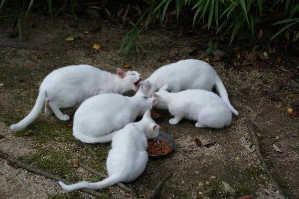 DSC08897 ユミと子猫.jpg