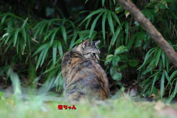 DSC08900 菊.jpg