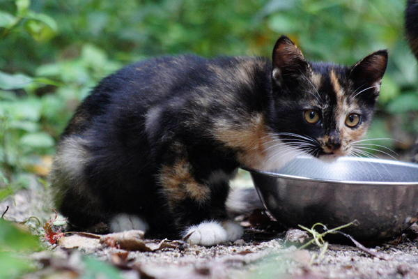 DSC08933 チョコの子猫.jpg