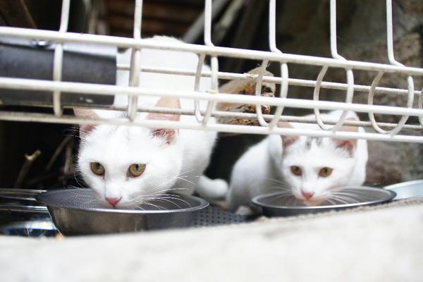DSC08952 ミルクの子猫.jpg