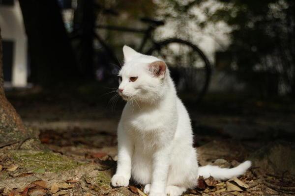 DSC08988 ユミの子猫.jpg