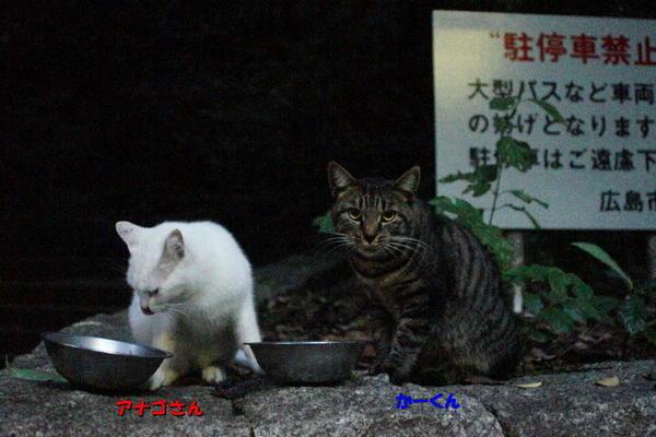 DSC09100 アナゴとかーくん.jpg