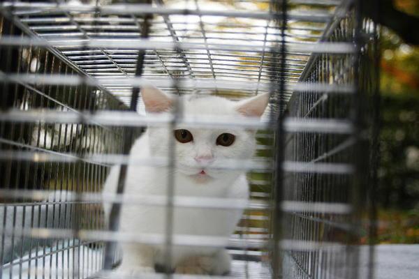 DSC09182 ユミの子猫.jpg