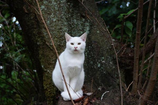DSC09185 ユミの子猫.jpg