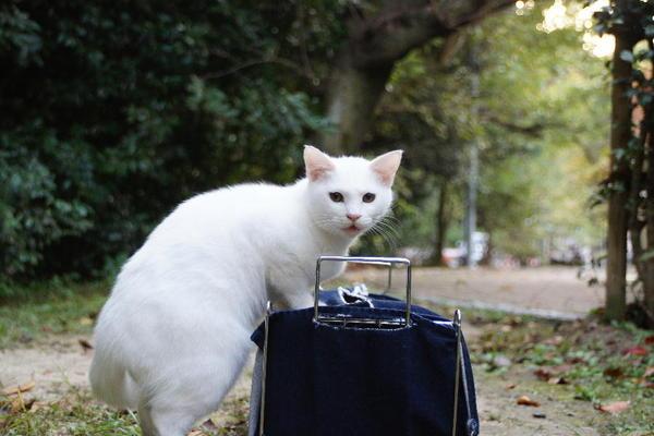 DSC09189 ユミの子猫.jpg