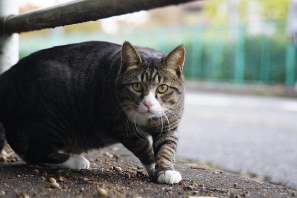 DSC09251 公園の猫.jpg