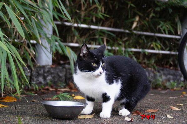 DSC09301 アサリ.jpg