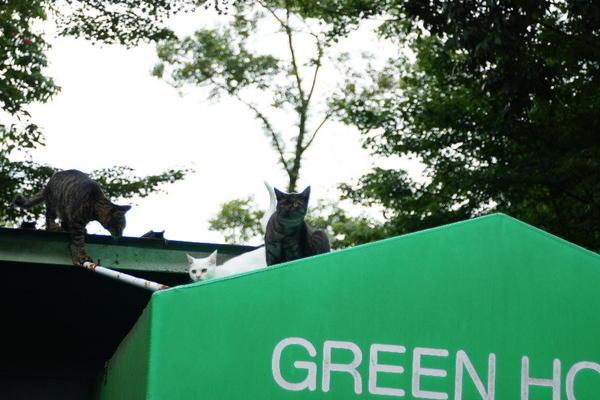 DSC09331 屋根の上の猫.jpg
