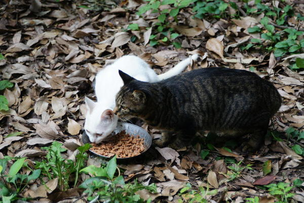 DSC09339 ミルクの子猫.jpg