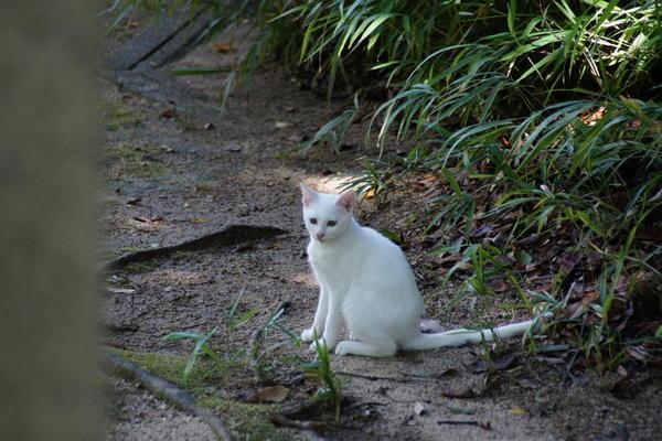 DSC09362 ユミの子猫.jpg
