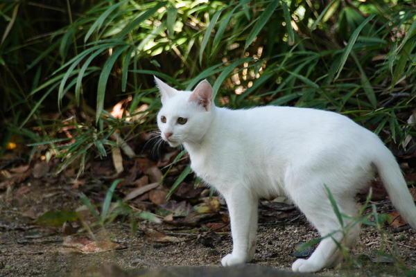 DSC09364 ユミの子猫.jpg