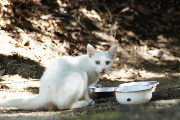 DSC09366 ユミの子猫.jpg