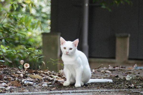 DSC09371 ユミの子猫.jpg