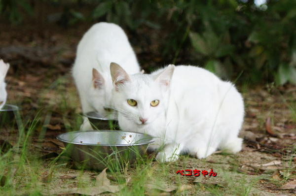 DSC09444 ペコちゃん.jpg