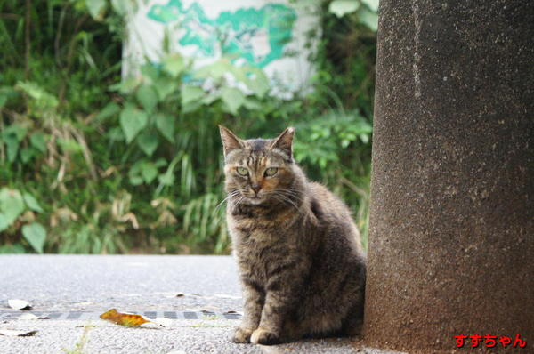 DSC09488 すずちゃん.jpg