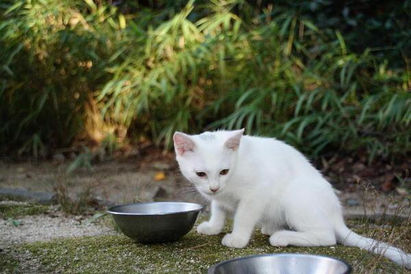 DSC09505 ユミの子猫.jpg