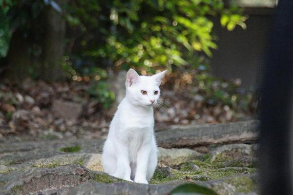DSC09522 ユミの子猫.jpg