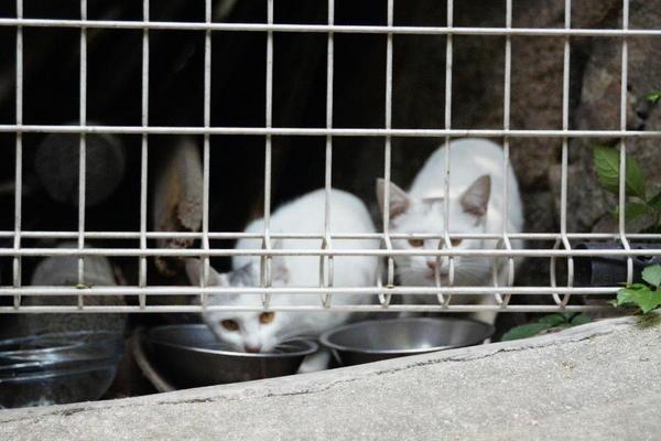 DSC09544 ミルクの子猫.jpg