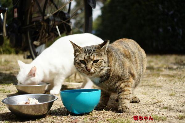 DSC09709 菊ちゃん.jpg