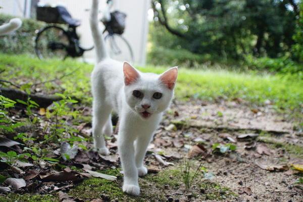 DSC09783 ユミの子猫.jpg
