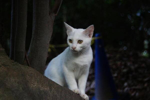 DSC09810 ユミの子猫.jpg