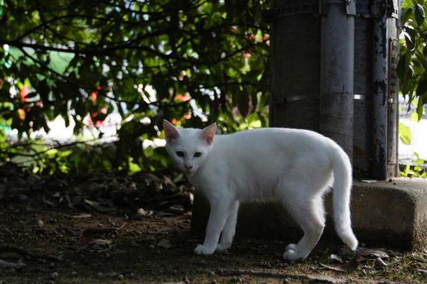 DSC09812 ユミの子猫.jpg